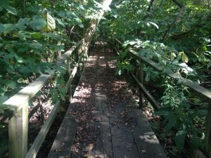 bridge trail in woods